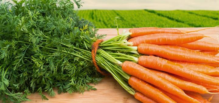 Puré de Zanahoria y Champiñones